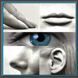 senses NLP