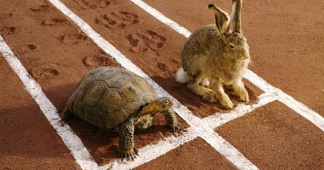 Hare-and-tortoise-on-runn-008