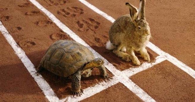 Hare-and-tortoise-on-runn-008